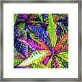 Croton Foliage Framed Print