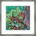 Crotons 3 Framed Print