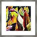 Crotons Sunlit 2 Framed Print