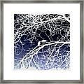 Crow Silhouette  Framed Print