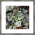 Crushed Lichen Framed Print
