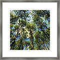 Crystal Lake Il Pine Grove And Sky Framed Print