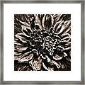 Dahlia De Pierre Framed Print