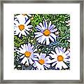 Daisy Flower Garden Abstract Framed Print
