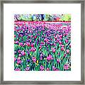 Dallas Tulips Framed Print