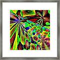 Damselwing Framed Print