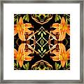 Day Lily Square Dance Framed Print