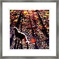 December Walk In The Blue Ridge Framed Print