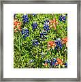 Decorative Texas Bluebonnets Meadow Digital Photo G33117 Framed Print