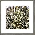 Deep In The Maine Woods Framed Print