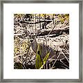 Deer In The Wood Framed Print