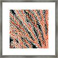 Detail Of Sea Fan, Or Gorgonian Coral Framed Print