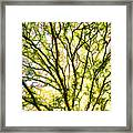 Detailed Tree Branches 1 Framed Print