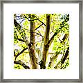 Detailed Tree Branches 2 Framed Print