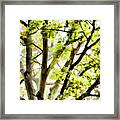 Detailed Tree Branches 3 Framed Print