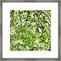 Detailed Tree Branches 4 Framed Print