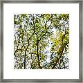 Detailed Tree Branches 5 Framed Print