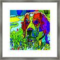 Dogs Can See In Color Framed Print