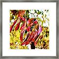 Dogwood Leaves Framed Print