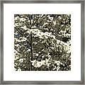 Dogwoods In Bloom Framed Print