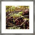 Double Rainforest Framed Print