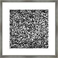Dramatic Black And White Petals On Stones Framed Print
