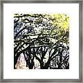 Dreamy Live Oaks Framed Print