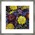 Dried Delight 3 Framed Print