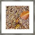 Dried Leaf On The Fern Framed Print