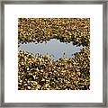 Dried Leaves In A Pond Framed Print