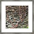 Dry Stone Wall And Vine Framed Print
