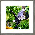 Eagle In The Garden Framed Print