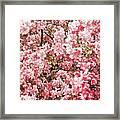 Earth Tones Apple Blossoms  Framed Print