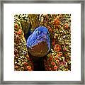 Eel In A Crack Between Two Anemone Worlds In Monterey Aquarium-california Framed Print