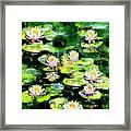 Eight #waterlilies Framed Print
