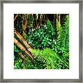 El Yunque National Forest Ferns Impatiens Bamboo Framed Print