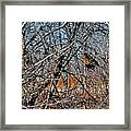 Elusive Woodcock's Woody Environment Framed Print