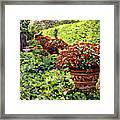 English Flower Pots Framed Print