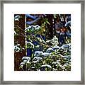 Enlightened Winter Framed Print