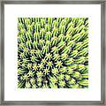 Euphorbia Framed Print