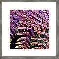 Faded Ferns Framed Print