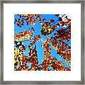 Fall Apricot Leaves Framed Print