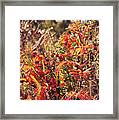 Fall Around  Framed Print