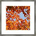 Fall Art Prints Orange Autumn Leaves Baslee Troutman Framed Print