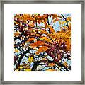 Fall Berries Framed Print