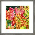 Fall Colors At The Vineyard Framed Print