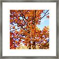 Fall Colors Looking Awesome Framed Print