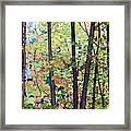 Fall Colour Medley Framed Print