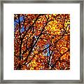 Fall Colours Framed Print