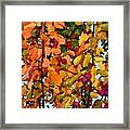Fall Crab Apples Framed Print